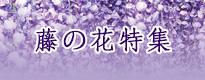 藤の花特集