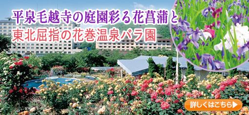 平泉毛越寺の庭園彩る花菖蒲と東北屈指の花巻温泉バラ園