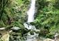 東京で唯一の滝「払沢の滝」散策と日本三大茶処「狭山」ミニ茶摘み体験