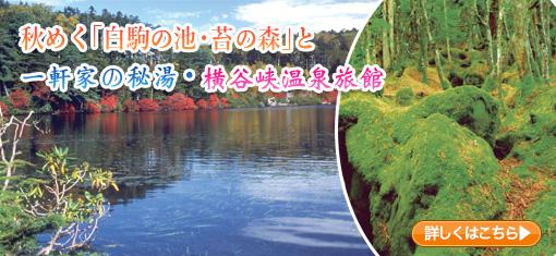 秋めく「白駒の池・苔の森」と一軒家の秘湯・横谷峡温泉旅館