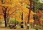 森が赤や黄金色に染まる!赤城自然園散策