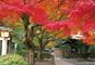 古より変わらぬ紅葉美や都に思いを馳せる! 鎌倉秋の彩り紀行
