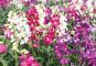 花満開!南房総お花摘み、里見氏ゆかりの館山城と白浜女来島温泉