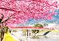 伊豆の風物詩「河津桜まつり」「雛のつるし飾りまつり」と海鮮浜焼きバイキング伊豆下田温泉