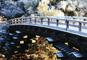日本三奇橋 猿橋と山梨の名湯 石和温泉