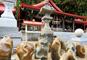 金運上昇「金蛇水神社」、七福神島巡り松島遊覧とウキウキ三陸海鮮福袋!