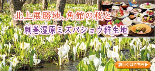 北上展勝地、角館の桜と刺巻湿原ミズバショウ群生地