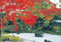 紅葉の名所!松島・円通院と牡蠣のカンカン蒸し食べ放題
