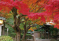 古より変わらぬ紅葉美や都に思いを馳せる!鎌倉秋の彩り紀行