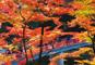 絶景!紅葉の香嵐渓と南信州・昼神温泉&焼津黒潮温泉