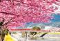 早春の春散歩 伊豆「河津桜まつり」と名湯・修善寺温泉