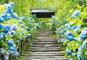 古より変わらぬ美しい花や都に思いを馳せる!鎌倉 あじさい紀行