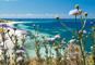 【友の会特別企画】花いっぱいの西オーストラリア 5日間