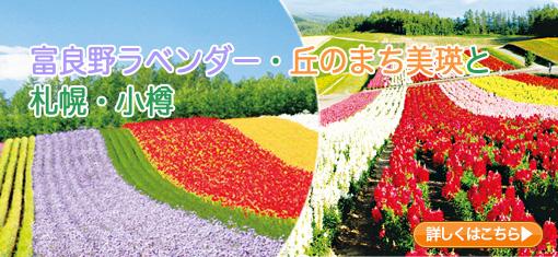 富良野ラベンダー・丘のまち美瑛と小樽・札幌