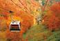 中世英国の世界・ブリティッシュヒルズと紅葉の那須空中散歩