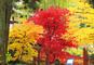 『与勇輝展 創作人形の軌跡』と豪華絢爛な瑞鳳殿を彩る紅葉