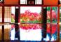 期間限定特別公開!関東では貴重な宝徳寺『床もみじ』と関東の耶馬溪・高津戸峡の紅葉