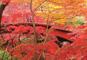 深紅に彩られた「弥彦もみじ谷」と日本海・魚のアメ横「寺泊」