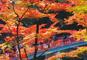 絶景!紅葉の香嵐渓と昼神温泉&舘山寺温泉