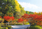 JRで行く 奈良、京都、紅葉の古都めぐり