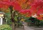 古より変わらぬ紅葉美や都に思いを馳せる!鎌倉 秋の彩り紀行