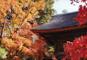 国指定天然記念物の平林寺境内林の紅葉と蔵の街・小江戸川越散策