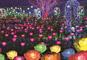 光の祭典!あしかがイルミネーションと現地案内人付・日光東照宮華麗なる彫刻「陽明門」