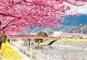 早春の春散歩 伊豆「河津桜まつり」と東伊豆・熱川温泉