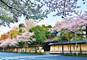 築地『すしざんまい』と東京の桜車窓観光、NHKスタジオパーク