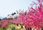 桜名所100選「赤城南面千本桜」と名湯・四万温泉