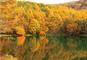 絵画のような絶景!秋の御射鹿池と白樺リゾート